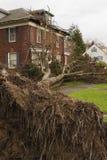 Gefallener Baum und Haus Stockfotografie