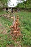 Gefallener Baum- und Kastenabzugskanal Lizenzfreie Stockbilder