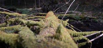 Gefallener Baum voll des Mooses Lizenzfreie Stockfotos