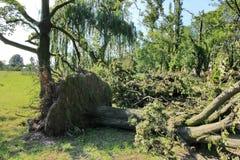 Gefallener Baum vorbei durchgebrannt durch schwere Winde am Park Stockfotografie