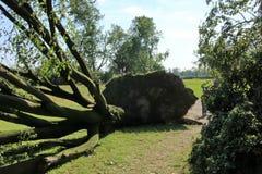 Gefallener Baum vorbei durchgebrannt durch schwere Winde am Park Lizenzfreie Stockfotos