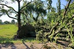 Gefallener Baum vorbei durchgebrannt durch schwere Winde am Park Stockbilder