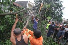 Gefallener Baum wegen des Hurrikans Stockbild
