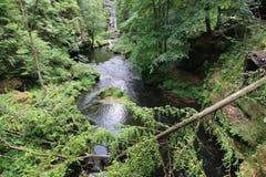 Gefallener Baumstamm - Schluchten auf dem Kamenice-Fluss Lizenzfreies Stockbild