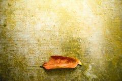 Gefallener Blatt Natur-Hintergrund Stockfoto
