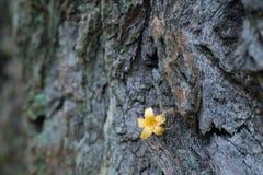 Gefallener Blumen-Aufenthalt auf Baum-Stamm Lizenzfreie Stockfotos