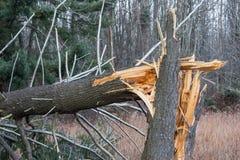 Gefallener, gebrochener Baum vom Hurrikanschaden Stockbild