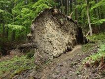 Gefallener gezierter Baum Lizenzfreies Stockfoto