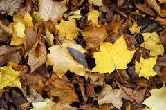 Gefallener Herbstlaub Stockfoto