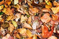Gefallener Herbstlaub Lizenzfreies Stockbild