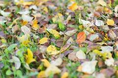 Gefallener Herbstlaub auf grünem Gras Stockbilder