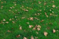 Gefallener Herbstlaub auf grünem Gras Stockfoto