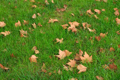 Gefallener Herbstlaub auf grünem Gras Stockbild