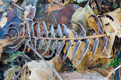 Gefallener Herbstlaub für Hintergrund Stockbilder
