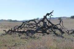Gefallener toter Baum auf dem Gebiet Lizenzfreies Stockfoto