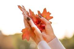 Gefallener trockener Herbst treibt in den Händen des jungen Mädchens in einer Luft Blätter lizenzfreie stockfotografie