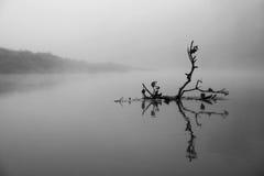 Gefallener Zweig im Fluss Lizenzfreie Stockfotos