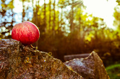 Gefallenes Apple stockfoto