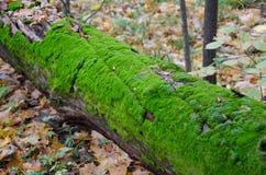 Gefallenes Baum-Kabel stockfotografie