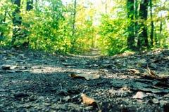 Gefallenes Blatt auf der gehenden Bahn in der Herbstwaldnatur lizenzfreies stockbild
