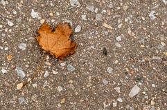Gefallenes Blatt auf grauem Asphalt im Herbst mit links Lizenzfreies Stockfoto