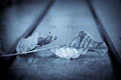 Gefallenes Blatt auf Holztisch im Herbst Stockfotografie