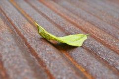 Gefallenes Blatt auf Rusted runzelte galvanisierte Eisenplatte Stockfotografie