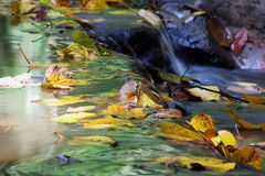 Gefallenes Blatt am Wasserfall Lizenzfreie Stockbilder
