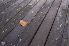 Gefallenes Herbstblatt auf Holzbrücke Lizenzfreie Stockbilder