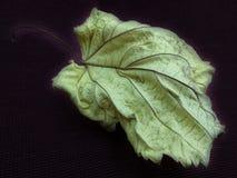 Gefallenes Herbstblatt auf rotem Hintergrund Stockfotografie