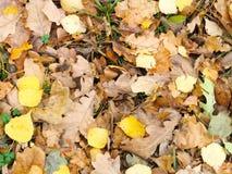 Gefallenes Herbstlaub lizenzfreies stockbild