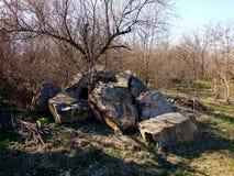 Gefaltete Granitsteine im Wald oder im Park lizenzfreie stockfotografie