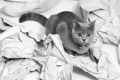 Gefaltetes Papier Lizenzfreies Stockfoto