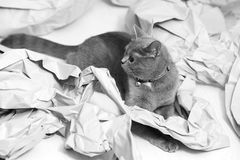 Gefaltetes Papier Stockfoto