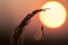 Gefangene Insekten im Netz bei Sonnenaufgang stockfotografie