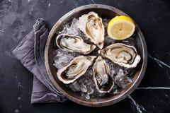 Geöffnete Austern mit Eis und Zitrone Stockfotografie