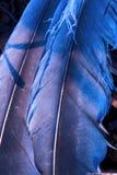 Gefieder blau und abstrakt Lizenzfreies Stockfoto