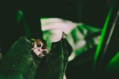 Gefiedertes Insekt auf Blatt lizenzfreies stockfoto