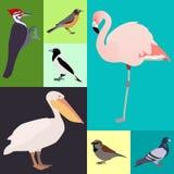 Geflügel ein Satz verschiedene Arten von Vögeln lizenzfreie abbildung