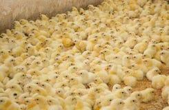 Geflügelfarm Lizenzfreies Stockbild