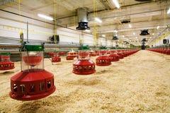Geflügelfarm Stockbild