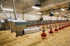 Geflügelfarm Lizenzfreie Stockfotos