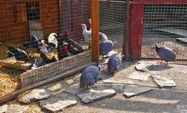 Geflügelhof mit Geflügel stockfotografie
