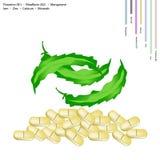 Geflügeltes Beanswith-Vitamin B1 und Vitamin B2 Stockbild
