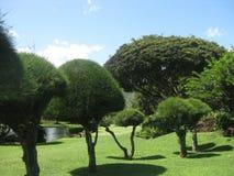 Geformte Bäume in einem schönen Garten auf der Insel von Kauai, Hawaii lizenzfreie stockfotos