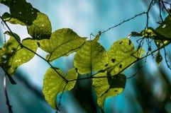 Geformte Blätter des Inneren Lizenzfreie Stockfotografie