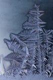 Geformte Frostmuster des Baums auf Winterfenster Stockfotos