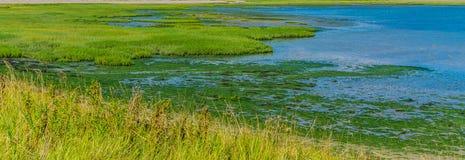 Geformte Grünpflanze-Wasserlandschaft der Insel Lizenzfreie Stockfotos