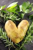 Potatoe Liebe lizenzfreie stockfotografie