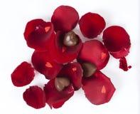 Geformte Schokoladen des Inneren in den rosafarbenen Blumenblättern Lizenzfreies Stockfoto